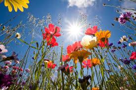 Per la Poesia e per la primavera che inizia
